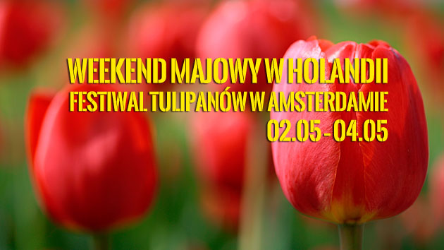 festiwal-tulipanow